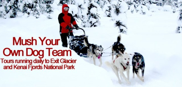 Dog Musher and her Team of Dogs